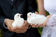 Two white pigeons Stock Photos