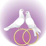 Two white pigeons and gold wedding rings Stock Photo