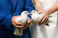 Two white pigeons in the hands of the bride and groom royalty free stock images