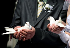Two white pigeons in hands of a married couple Stock Photo