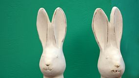 Two white easter bunnies. royalty free stock photography