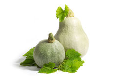 Two White Pumpkins with Green Leaves Isolated on White Stock Photo
