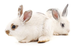 Two white rabbits. Two white rabbits on a white background Stock Images