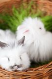 Two white rabbits are in the basket Royalty Free Stock Photos