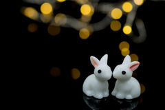 Two white rabbits Stock Images