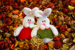 Two white rabbits on the colored background Royalty Free Stock Photo