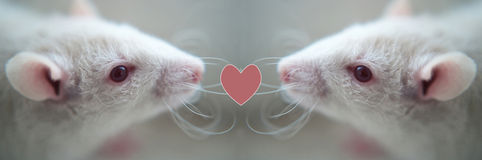 Two white rats. With heart on light background Royalty Free Stock Photos