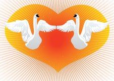 Two white swans Royalty Free Stock Photos