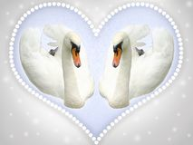 Postcard with two white swans. royalty free stock photography