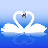 Two white swans with love. Valentine day Stock Photo