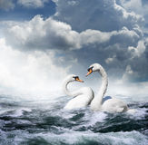 Two white swans. Swimming facing each other in turbulent waters with a cloudy sky stock image