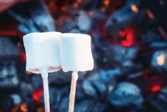 Two white sweet marshmallows roasting over fire flames. Marshmallow on skewers roasted on charcoals.  Royalty Free Stock Images