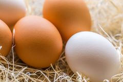Two white and three brown eggs on the background of hay stock images