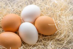Two white and three brown eggs on the background of hay royalty free stock image
