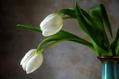Two white tulips in a porcelain vase against a rustic wall Royalty Free Stock Photos
