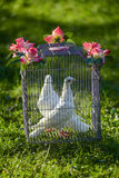 Two white wedding pigeons in cage Royalty Free Stock Images