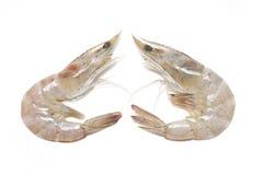Two Of Whiteleg Shrimp. Royalty Free Stock Images