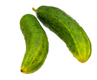 Two whole cucumbers Royalty Free Stock Photo