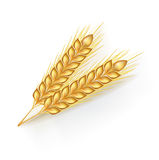 Two whole grains  on white Royalty Free Stock Images