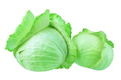 Two whole heads of green leafy cabbage on white background isolated closeup, big and small round ripe white headed cabbage stock images