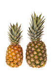 Two whole pineapple fruits Stock Photos