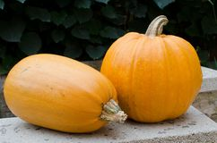 Two whole pumpkins. Two big whole pumpkins Stock Photos