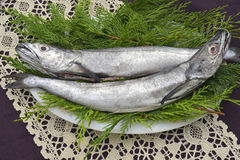 Two whole and raw hake in tray. Two fresh European hake fishing hook, two whole and raw hake in tray Royalty Free Stock Images