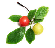 Two Wild Berries Royalty Free Stock Images