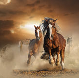 Two wild chestnut horses running together in dust. Front view royalty free stock photo