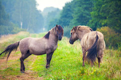 Two wild horses. On the meadow stock image