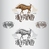 Two wild or hunting labels with engraving style boar or hog Royalty Free Stock Photo