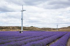 Two windmills over rows of lavender Royalty Free Stock Photo
