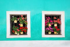 Two windows decorated with fresh colorful flowers Stock Images