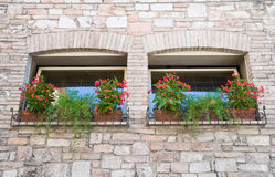 Two windows with flowerpots. Stock Photo