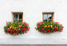 Two windows with flowers. Of traditional alpine house in Austria royalty free stock photo