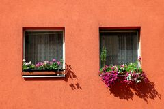 Two windows on the orange wall decoration with flowers Royalty Free Stock Images
