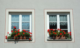 Two windows with red flowers. And white curtains stock photo