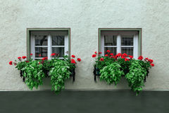 Two windows and red flowers Stock Photo