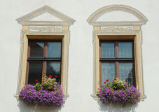 Two windows with violet flowers. Two painted windows with violet flowers royalty free stock image