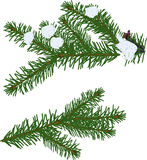 Two winter green fir branches on white. Illustration with green fir branches isolated on white background Royalty Free Stock Images