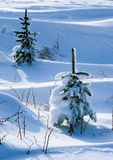 Two in the winter. Illustrations,snow forests royalty free stock photo