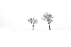 Two winter tree Royalty Free Stock Photography