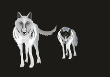 Two wolfes Royalty Free Stock Image