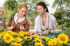 Two woman choose sunflowers in garden center Stock Photos