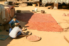 Two woman on the elaboration of drying seeds at the village of M Royalty Free Stock Photo