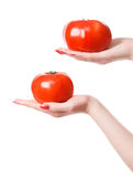 Two woman hands holding tomatos Royalty Free Stock Photo