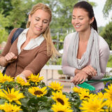 Two woman shopping for sunflowers garden center Royalty Free Stock Images