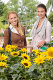 Two woman standing by sunflowers garden center Stock Image