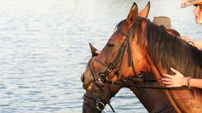 Two woman with their horses swimming in the lake. Two beautiful young woman with their horses swimming in the lake at sunset stock video