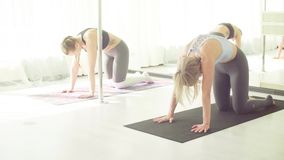 Two women doing yoga asanas in studio. Yoga class. Two women doing yoga asanas in bright studio near the mirror. Cat and cow back stretch exercise stock video
